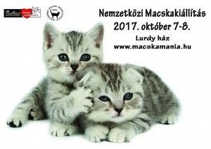 macskamania fedor 201710